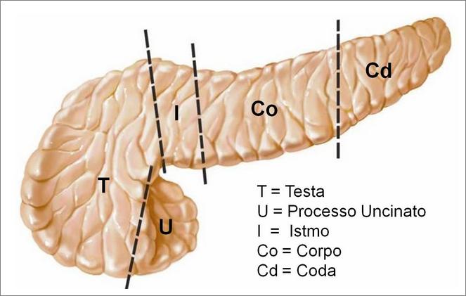 Suddivisione-Pancreas