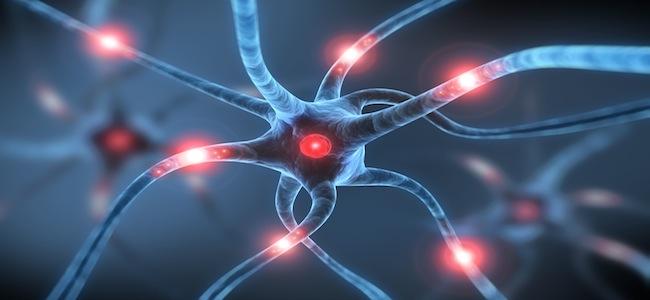Neuronale zellen bald mountain science - Gemelli diversi foggia ...