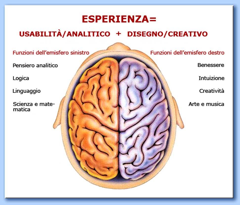 cervelloemisferi2