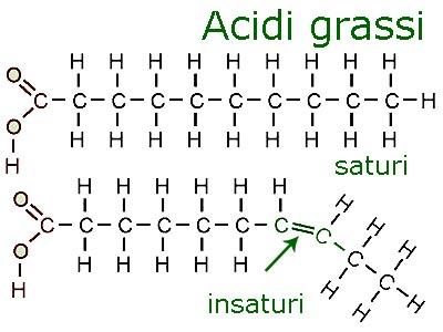 grassisatin