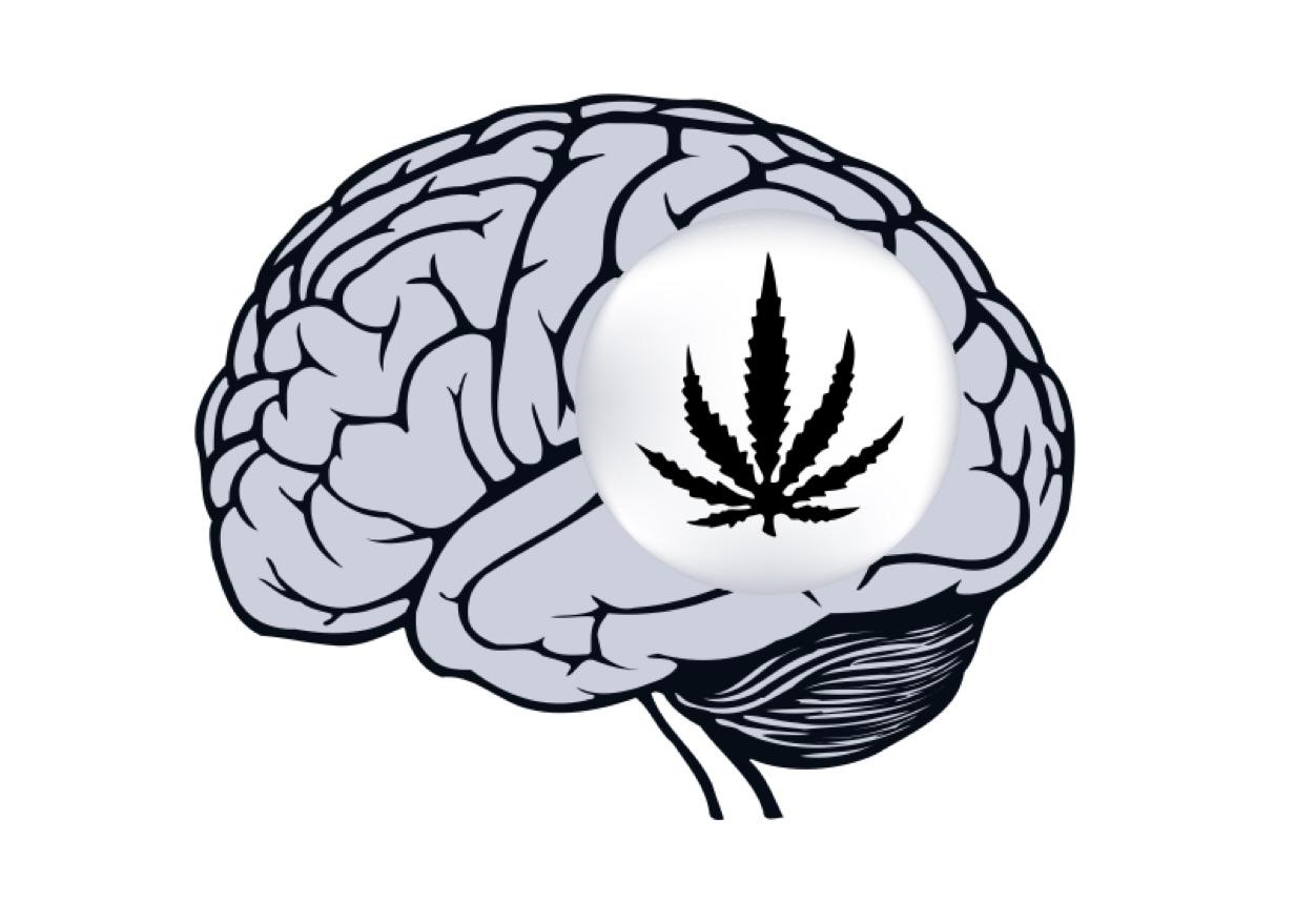 marijuana-and-brain-160630