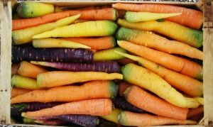 carote varietà erbario