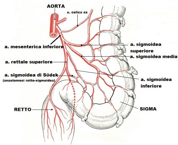 Berühmt Sigma Anatomie Bilder - Anatomie Von Menschlichen ...
