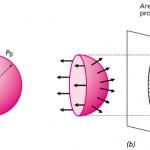 Gemelli diversi o uguali la differenza tra i monozigoti e i dizigoti bald mountain science - Volumi uguali di gas diversi ...
